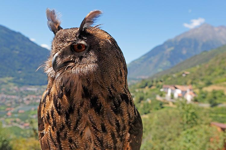 Bird care centre and bird of prey air show at Castle Tyrol