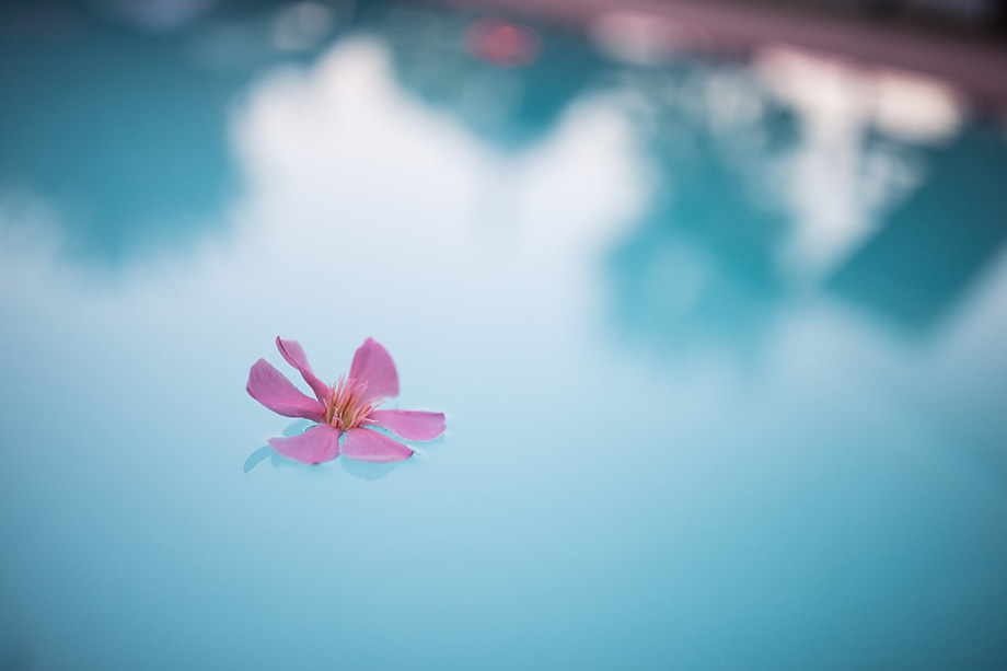 Oleander blossom on the water surface of the saltwater pool